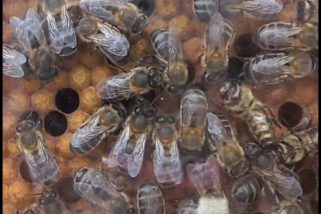 ¡Salvemos a las abejas!